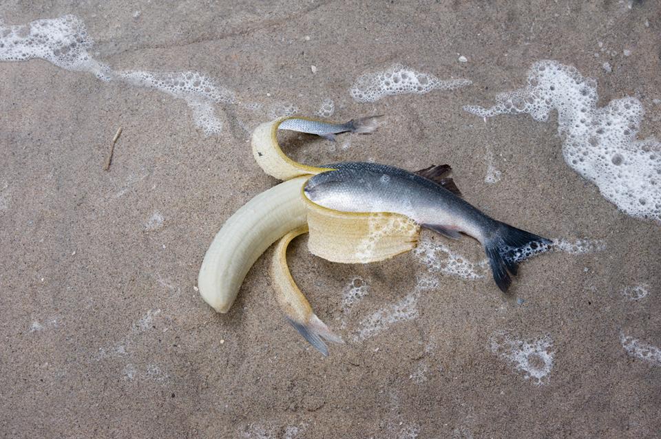 miranda_vijfvinkel_banaan