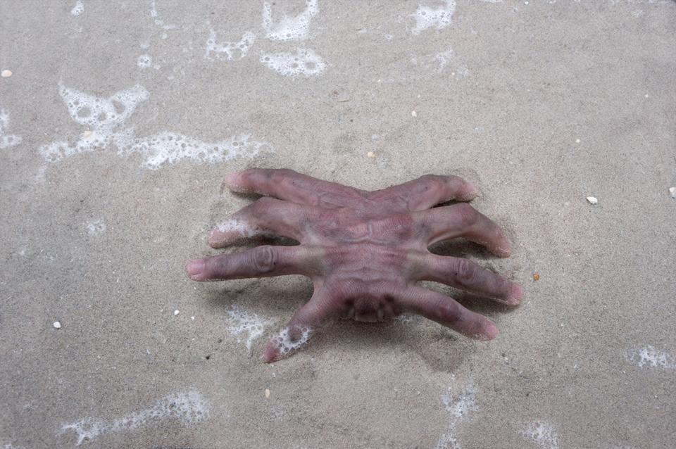 miranda_vijfvinkel_krab_hand